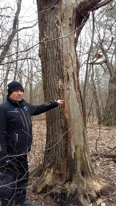 Das war der Baum, aus dem unsere Stehtische gefertigt worden sind